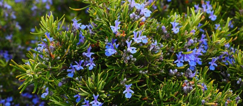 terraverde-paisajismo-huerto-aromatico